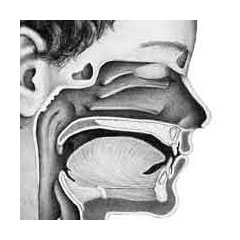 a cutaway diagram of a child's sinuses and mouth